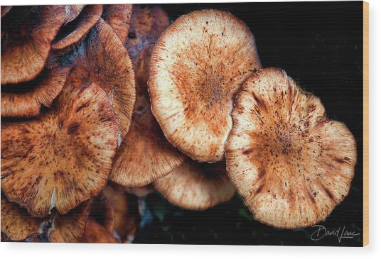 Chicken Of The Woods Wood Print