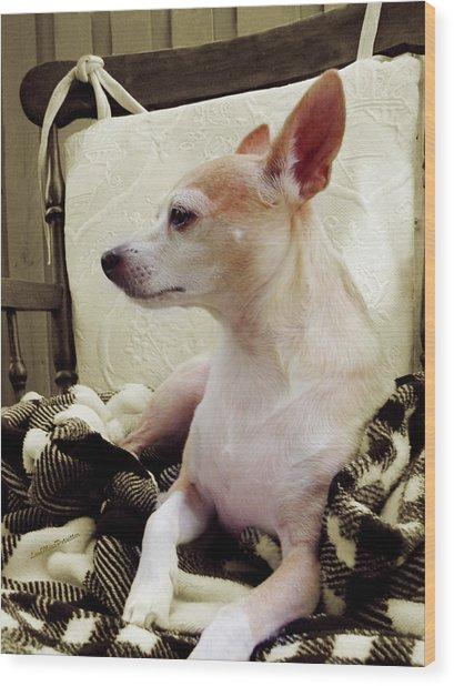 Chihuahua Chiqui Portrait 3 Wood Print