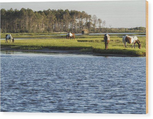 Chincoteague Ponies On Assateague Island Wood Print