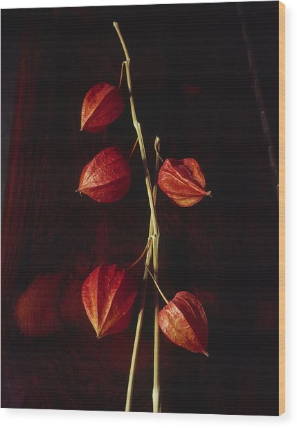 Chinese Lanterns Wood Print by Art Ferrier
