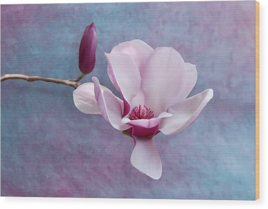 Chinese Magnolia Flower With Bud Wood Print