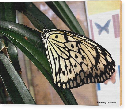 Chinese Yellow Swallowtail Wood Print