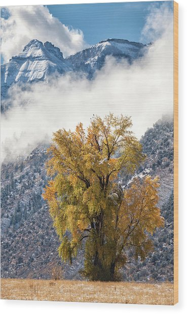 Chipeta And Cottonwood Wood Print