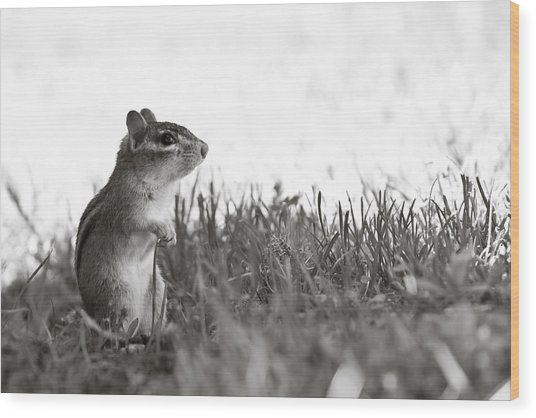 Chipmunk In Black And White Wood Print by Edward Myers