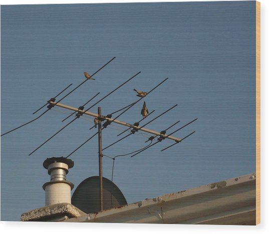 Chirping Antenna Wood Print by Stephen Davis