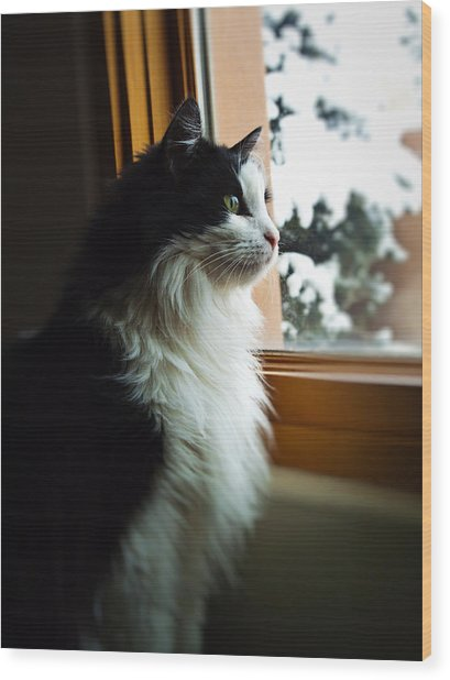 Chloe In Winter Window Wood Print