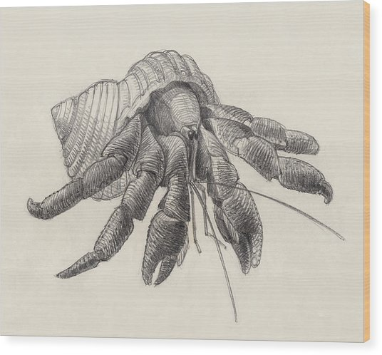 Chocolate Hermit Crab Wood Print