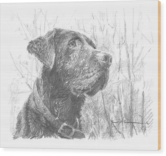 Chocolate Labrador In Woods Drawing Wood Print by Mike Theuer