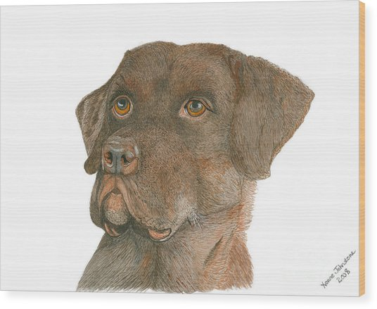 Chocolate Labrador Wood Print