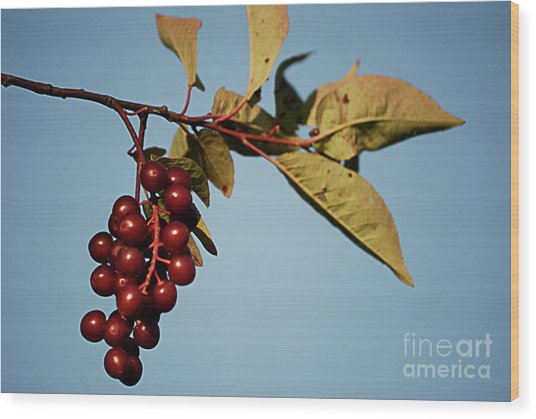 Choke Cherry Wood Print