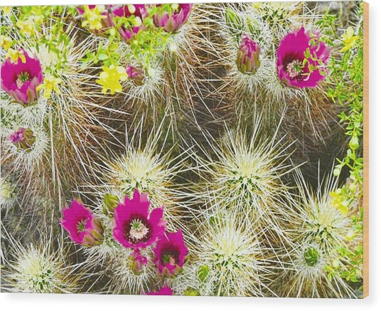 Cholla Cactus Blooms Wood Print
