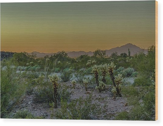 Cholla Desert Sunset Wood Print
