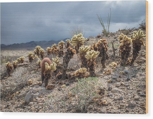 Cholla Family With Guests Wood Print