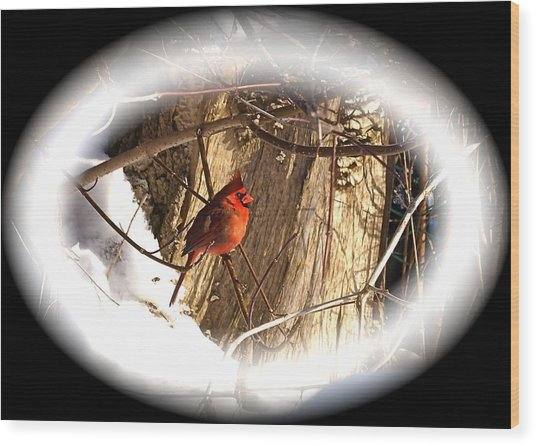 Christmas Cardinal Wood Print by Peter Gray