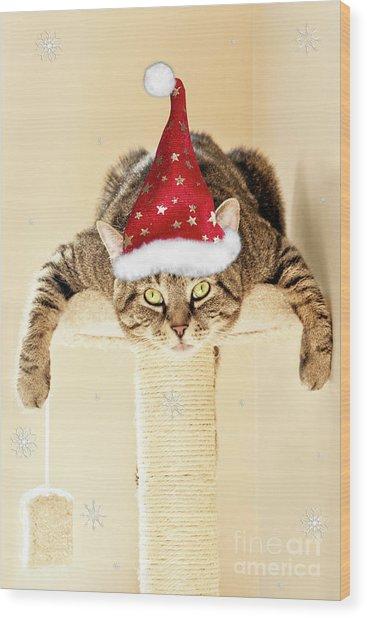 Christmas Splat Cat Wood Print