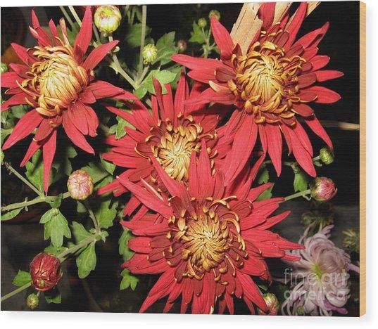 Chrysanthemum 2 Wood Print