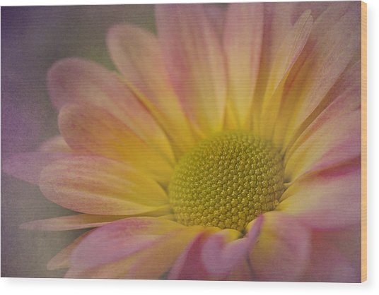 Chrysanthemum 3 Wood Print