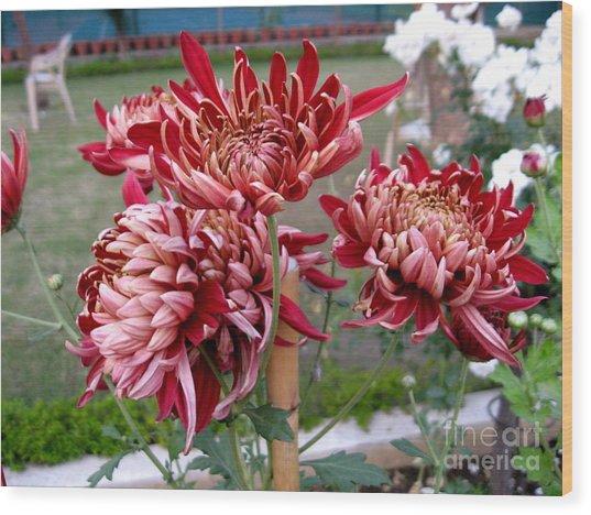 Chrysanthemum 4 Wood Print