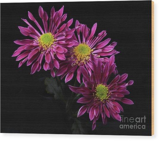 Chrysanthemum 'saba' Wood Print