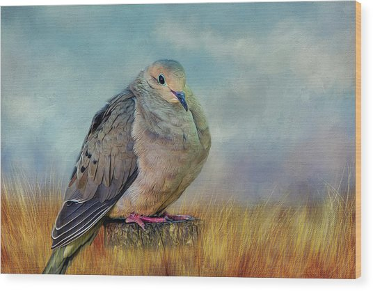 Chubby Dove Wood Print