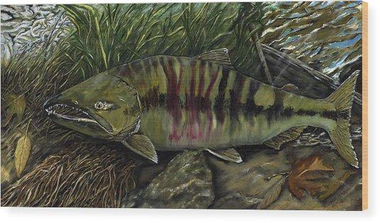 Chum Salmon Wood Print