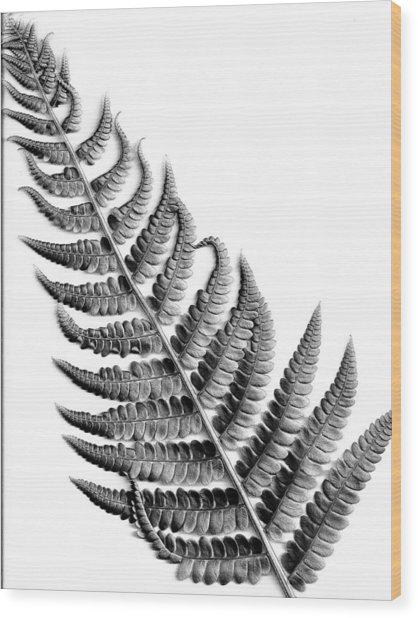 Cinnamon Fern Wood Print by Louis Dallara