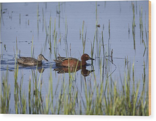 Cinnamon Teal Pair Wood Print