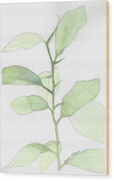 Citrus Sapling Wood Print