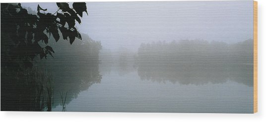 Clarity Shining Through Wood Print by Tom Hefko