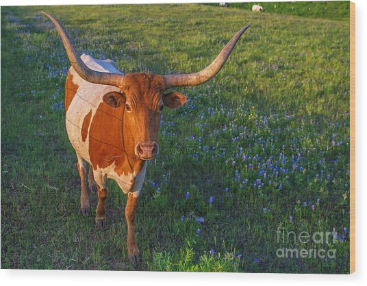 Classic Spring Scene In Texas Wood Print