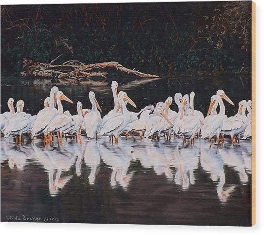 Clear Lake Pelicans Wood Print