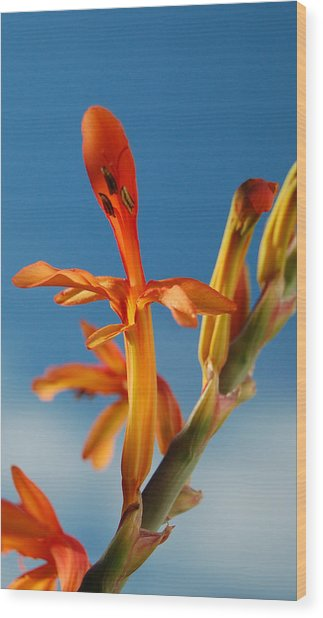 Clear Orange Wood Print by Jean Booth