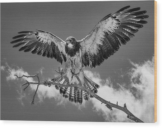Cleared For Landing 2 Wood Print