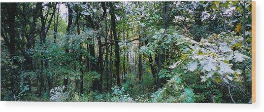 Clearing Glimpsed 1 Wood Print by Tom Hefko