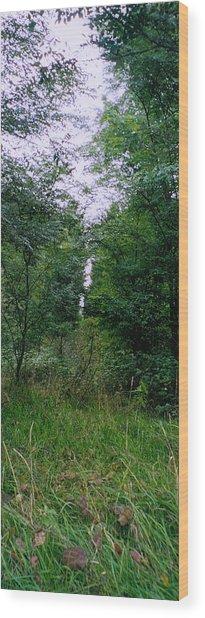 Clearing Glimpsed 7 Wood Print by Tom Hefko