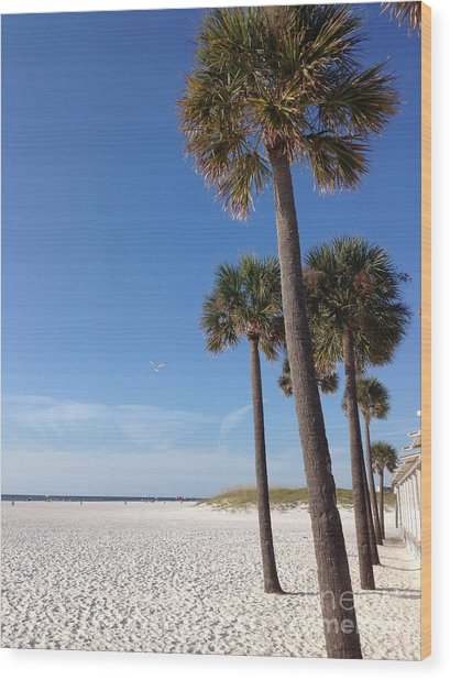 Clearwater Palms Wood Print