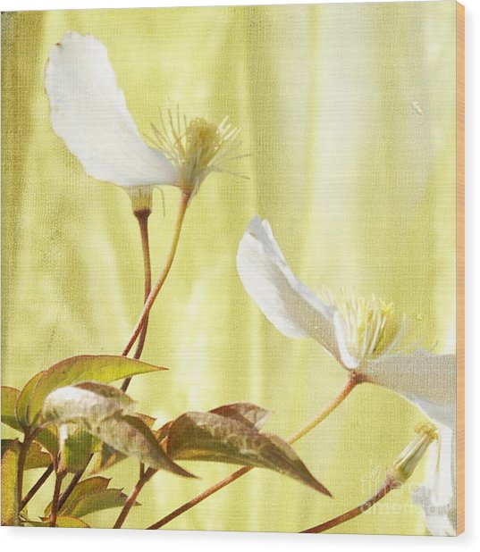 Clematis And Sunshine Wood Print