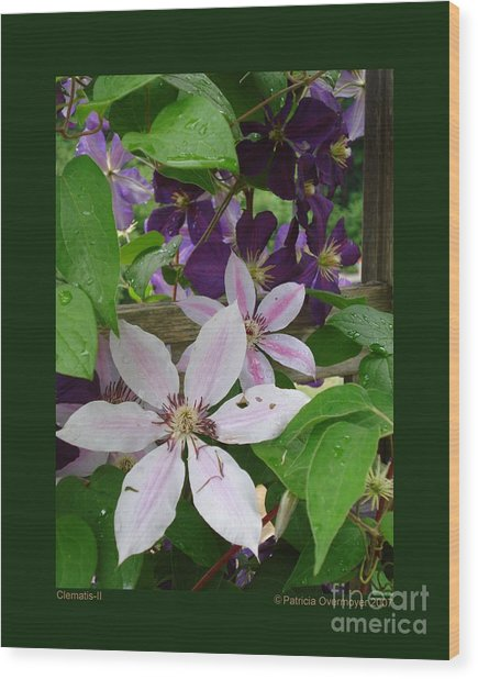 Clematis-ii Wood Print