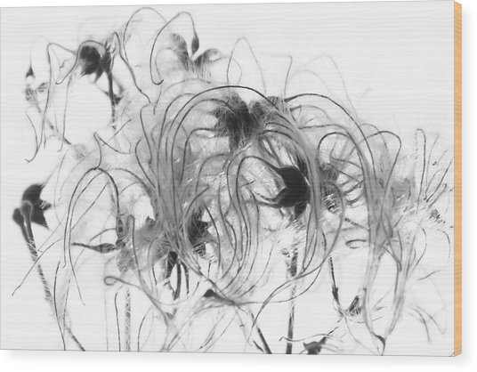 Clematis Seeds Wood Print