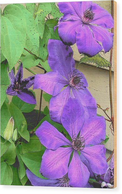 Clematis Trail Wood Print by Vijay Sharon Govender