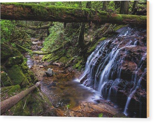 Cliff Gilker Park Wood Print