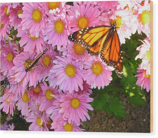 Cliff House Butterflies Wood Print by Heather Weikel