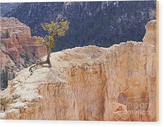 Clinging To The Top Of The Wall Wood Print