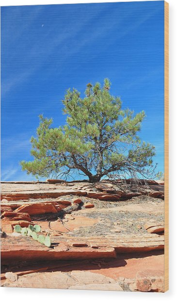 Clinging Tree In Zion National Park Wood Print