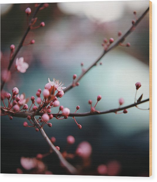 Close-up Of Plum Blossoms Wood Print