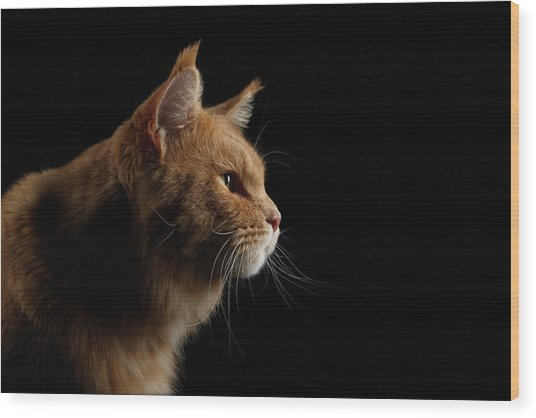 Close-up Portrait Ginger Maine Coon Cat Isolated On Black Background Wood Print