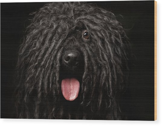 Close Up Portrait Of Puli Dog Isolated On Black Wood Print