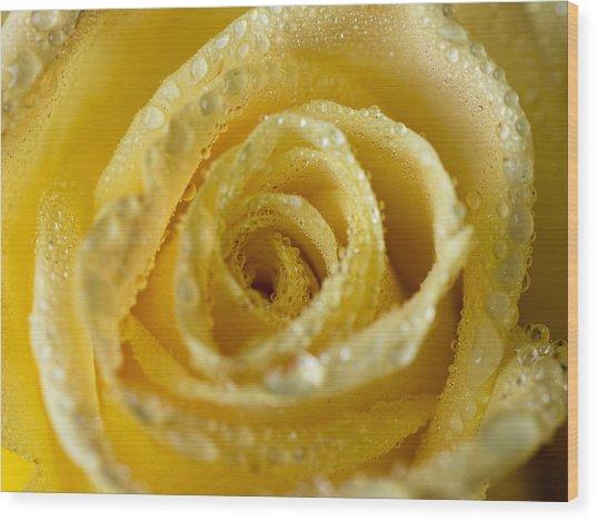 Close Up Yellow Rose Wood Print
