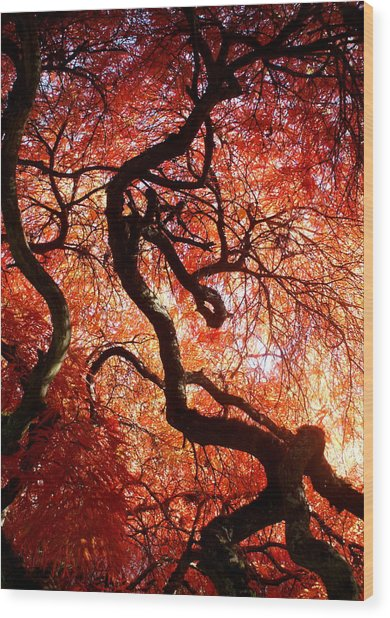 Closeness Wood Print by Sonja Anderson