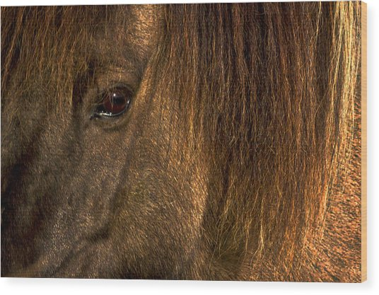 Closeup Of An Icelandic Horse #2 Wood Print